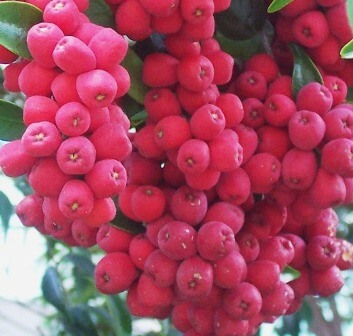 water berries