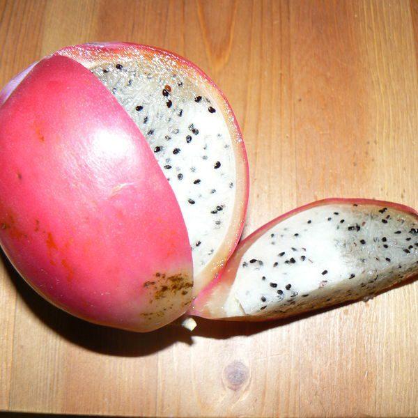 קובו / תפוח מדברי