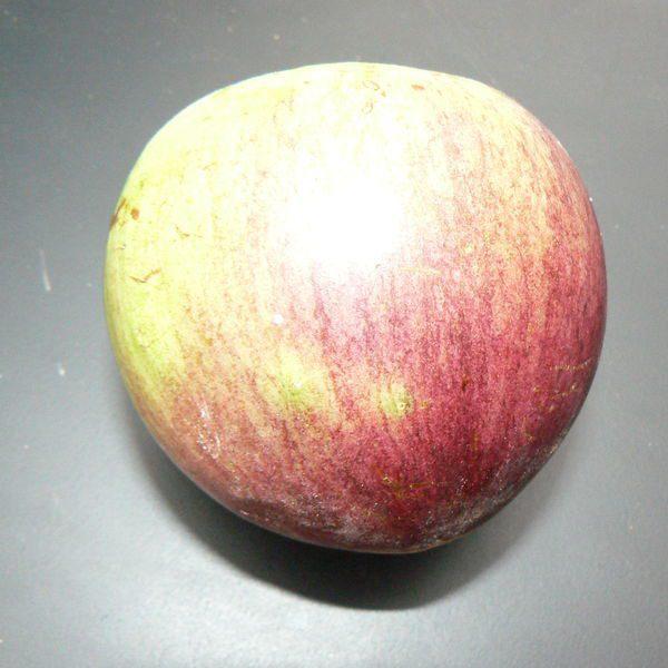 תפוח הכוכב