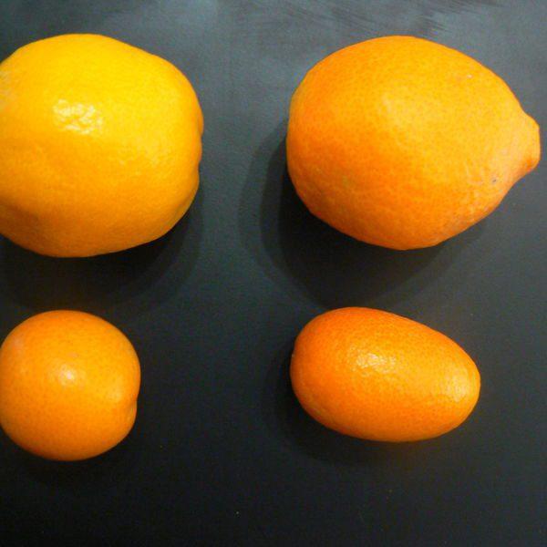 קומקוואט / תפוז סיני